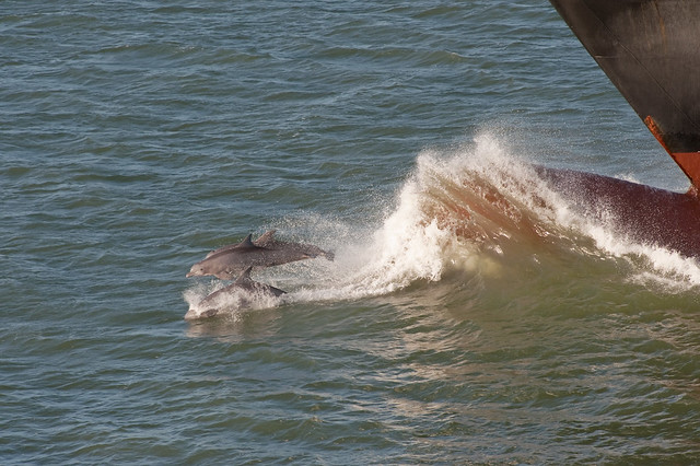 Dolphins and Bow, 10/26/10