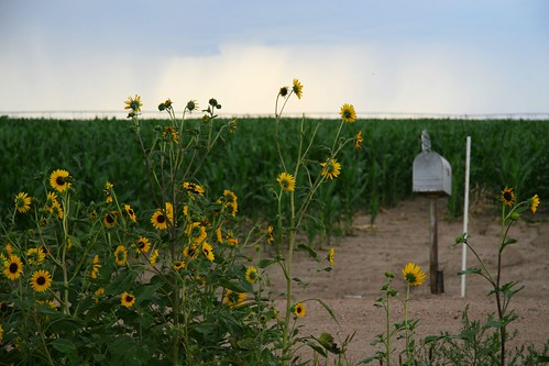summer field mailbox rural corn nebraska farm stormy driveway sprinkler sunflowers