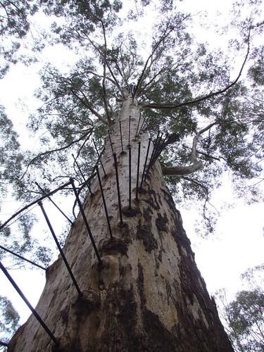 Diamond Tree Lookout