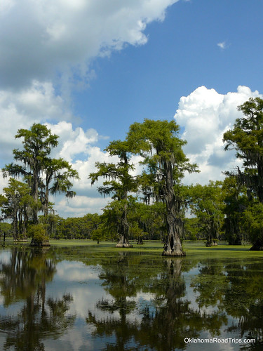 Caddo Lake - Texas