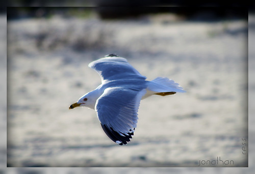 ~flight of the seagull~