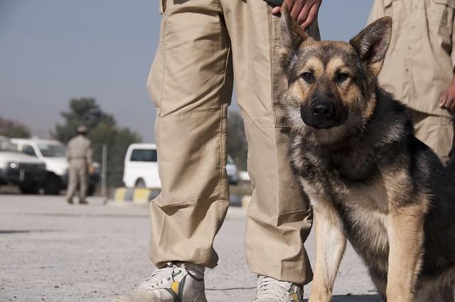 Image Result For Dog Trainingsion