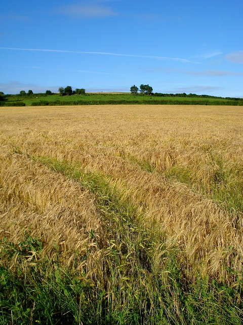 barley fields by nitrok-#26
