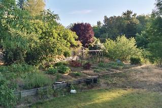 2007 Garden 044