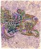 LSD GRAFFITI DESIGN ON PAPER