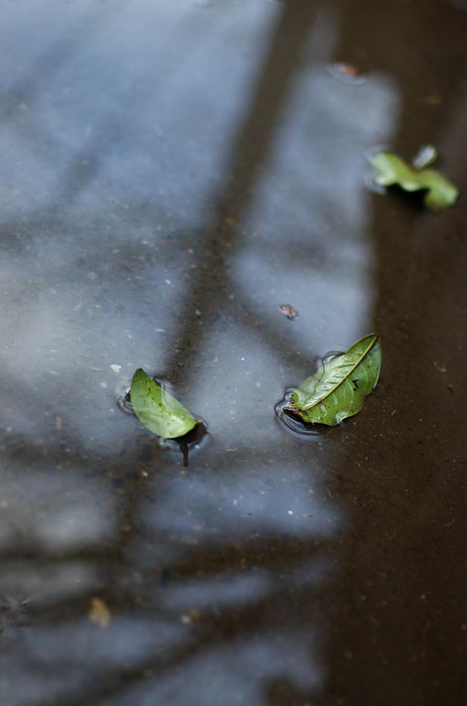 水たまりの葉っぱ DSC_3982