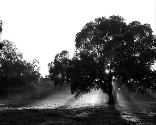 120 sunrise d76 picaday filmscan crepuscular rz67 panf mawsonlakes 20100604
