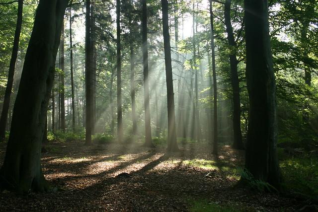 Waldlichtung mit Strahlung;...aus der Reihe Strahlung und Wald.