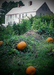 Pumpkins on the Banke