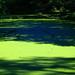 Small photo of Ohio Algae