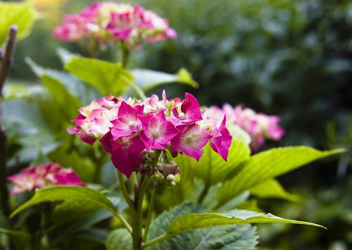 ...lo que pasa en mi jardín... by Garbándaras