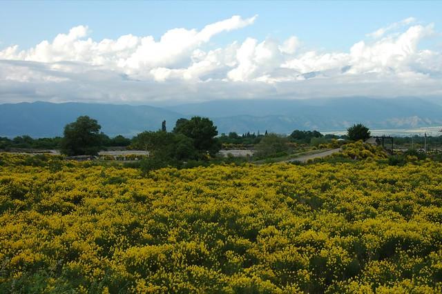 Kahketi Landscapes - Kakheti, Georgia
