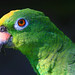 Yellow Crown Amazon parrot by --Raven