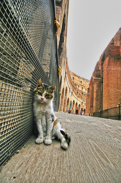 Coloseo Cat