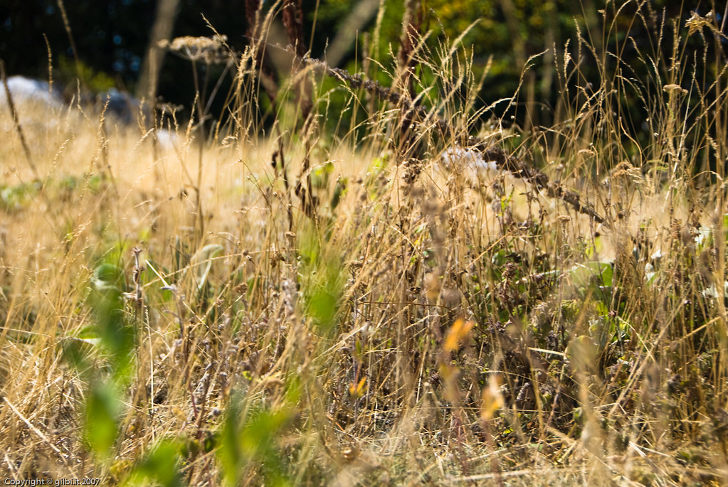 butterfly farm dabruzzo region - photo#42