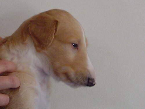 Male Puppy 2c