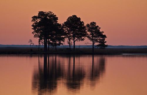 trees nature water sunrise wildlife national refuge blackwaternwr rensikphotos