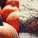 Happy Halloween by Kristybee