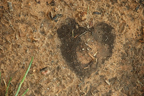 Heart of Mud.