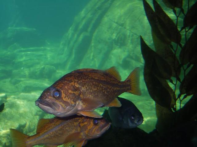 Medium Fish Ny Aquarium By Reid Harris Cooper