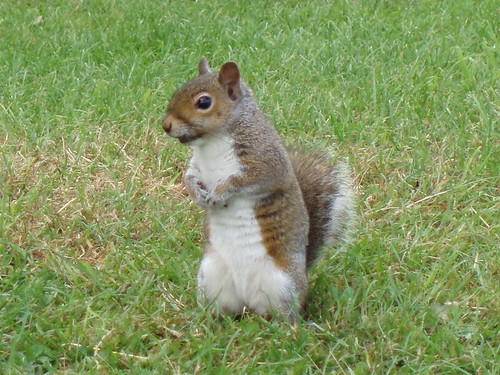 Squirrel Posing