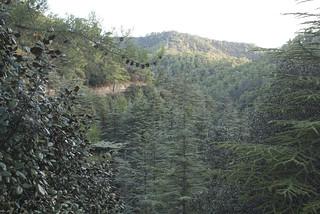 Image of Cedar Valley. geotagged limassol zypern cyp cedarvalley geo:lat=3498797342 geo:lon=3268636674