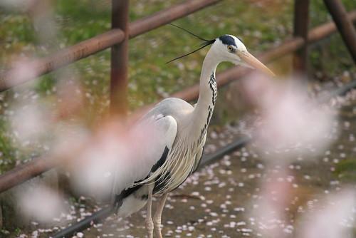 4-46姬路動物園