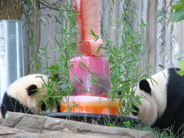 panda fruitsicle