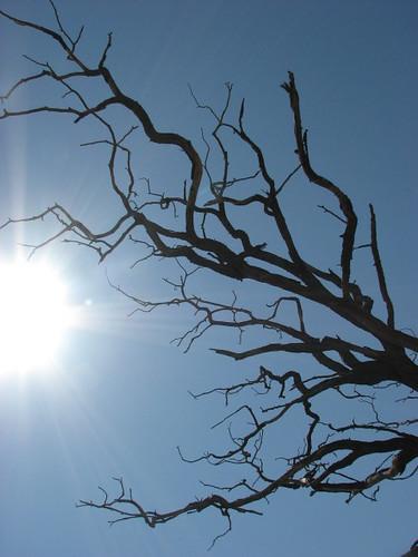 dead tree (thirst)