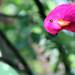 Fake Parrot by chrisjbarker