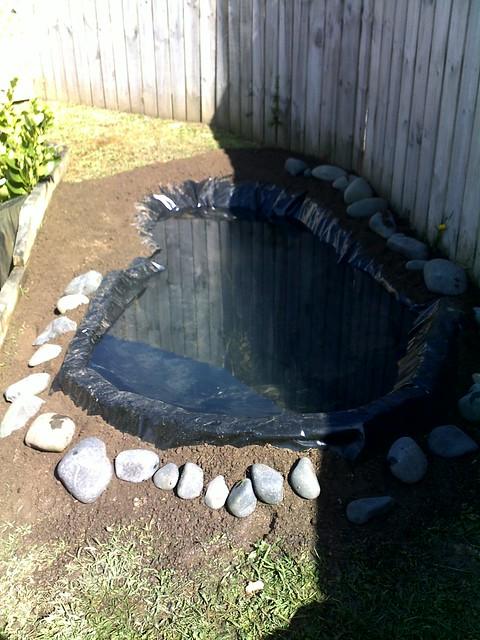 backyard turtle pond flickr photo sharing