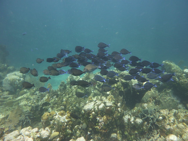 School of fish while scuba diving in Utila