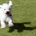 Cindy on the run