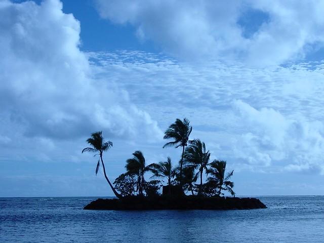 Mandarin Palm
