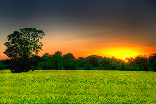 ireland sunset tree hdr rapeseed skreen