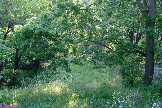 My Wild Backyard  Flickr  Photo Sharing!