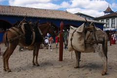 mare(0.0), camel(0.0), animal(1.0), mule(1.0), pack animal(1.0), horse(1.0), horse harness(1.0),