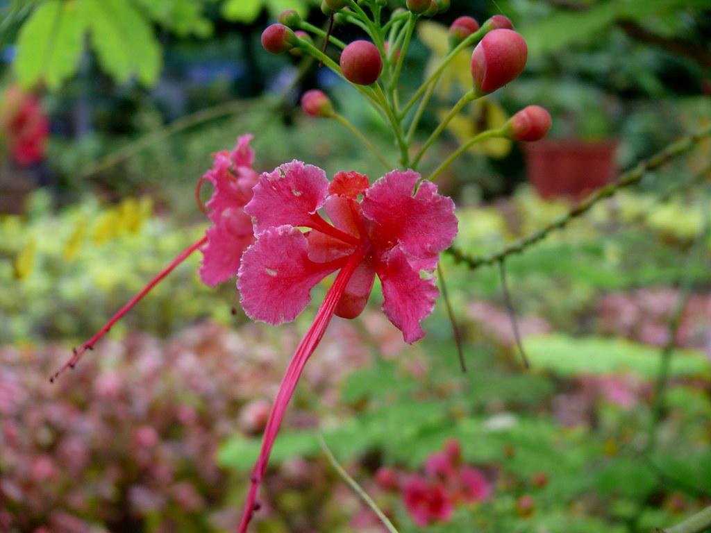 Flowers Name In Urdu Flowers Name Flowers Name In Urdu