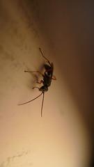 Bug On The Wall