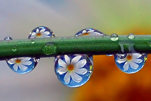 friendly little water drops