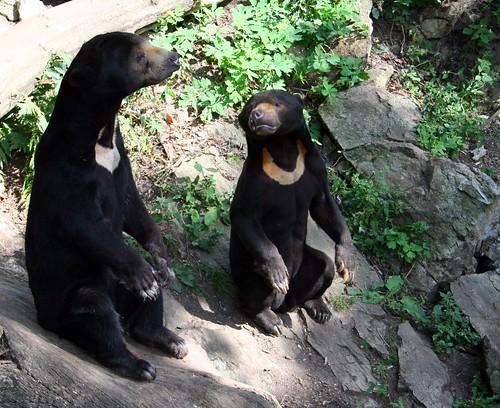 Jihlava zoo 012
