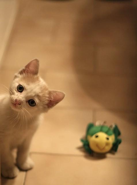 Un gattico ed il suo grillo