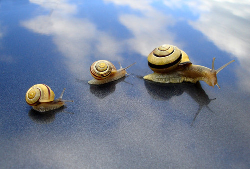 snails by JasonOzur