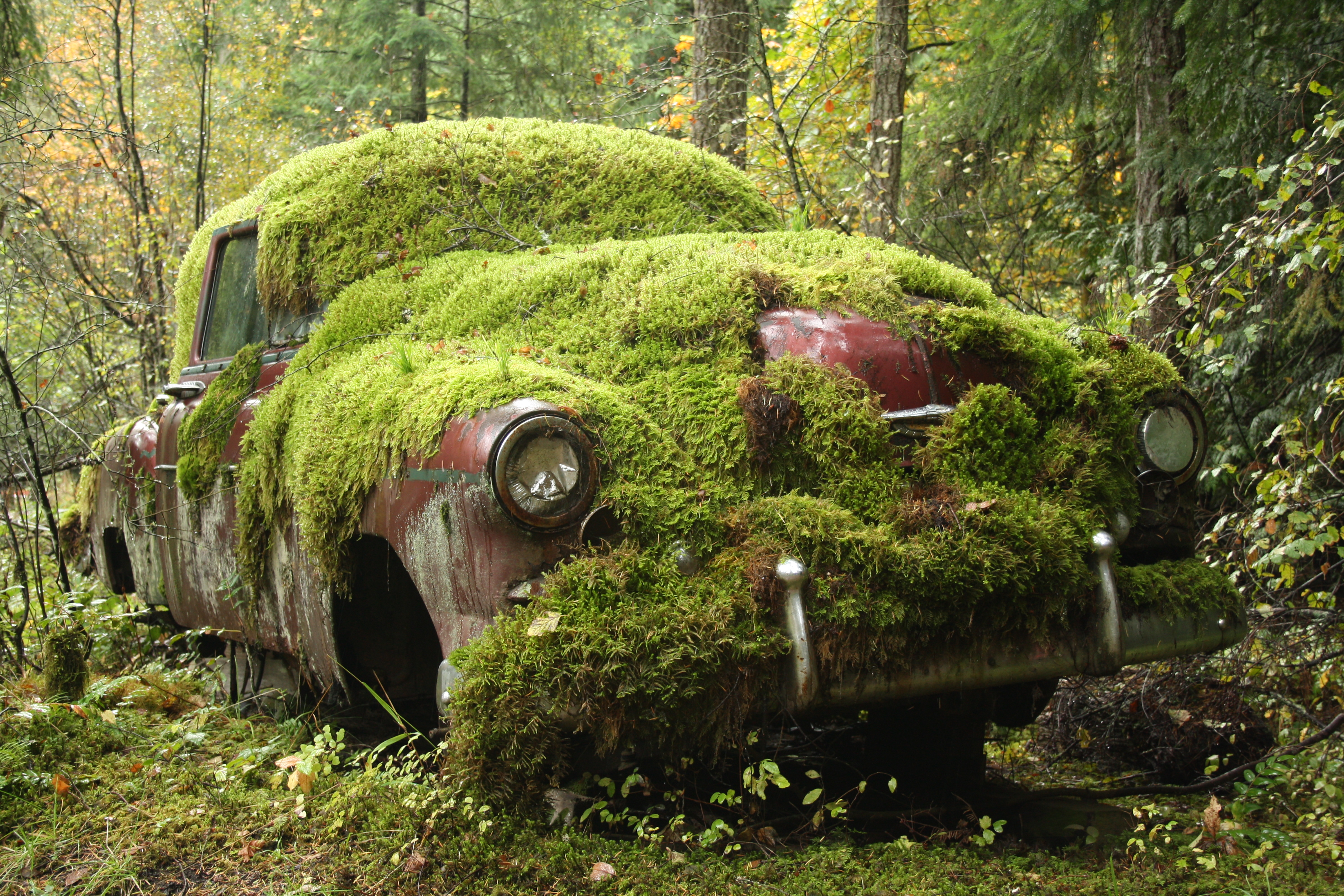 Moss Covered Car
