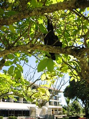 Fruit Bat Trees