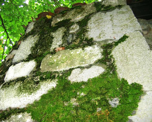 mur moussu mousse sur un mur saint bertrant de cominge by tonton copt flickr photo. Black Bedroom Furniture Sets. Home Design Ideas