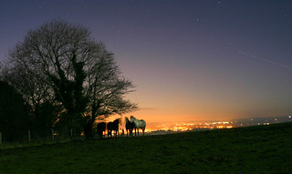 Moonlit Horses... | by Ben Ward In Hove