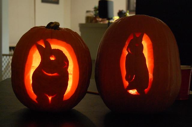 Bunny pumpkins halloween flickr photo sharing