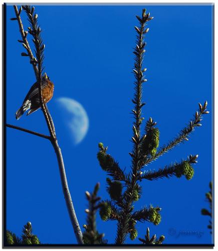 moon geotagged bravo day song soe onblue janusz abigfave infinestyle diamondclassphotographer superhearts bestplacetolive songfortheendoftheday geo:lat=49160197 geo:lon=122806849 natureselegantshot