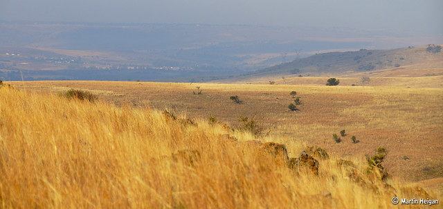 Cradle of Humankind - Winter Colours